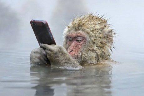 猿もスマホの時代