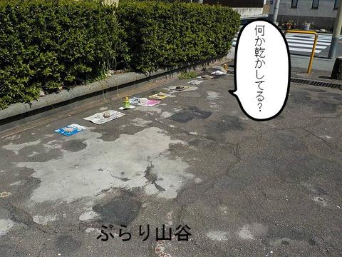 玉姫公園で驚く光景