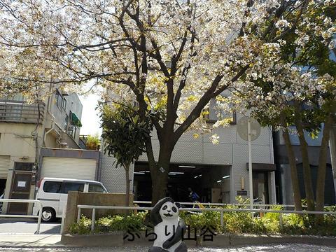公園の桜の咲いている下にあるパンダが変