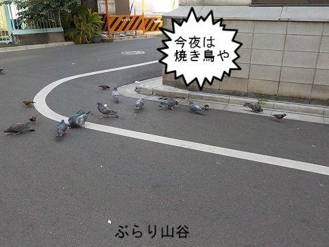 ドヤ街にいる鳩