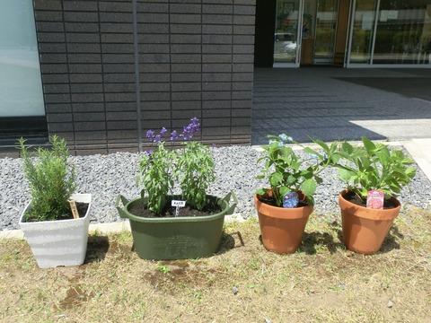 植え付け後 お花