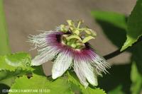 passionfruit181001-2