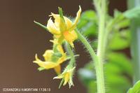 tomato170913-2