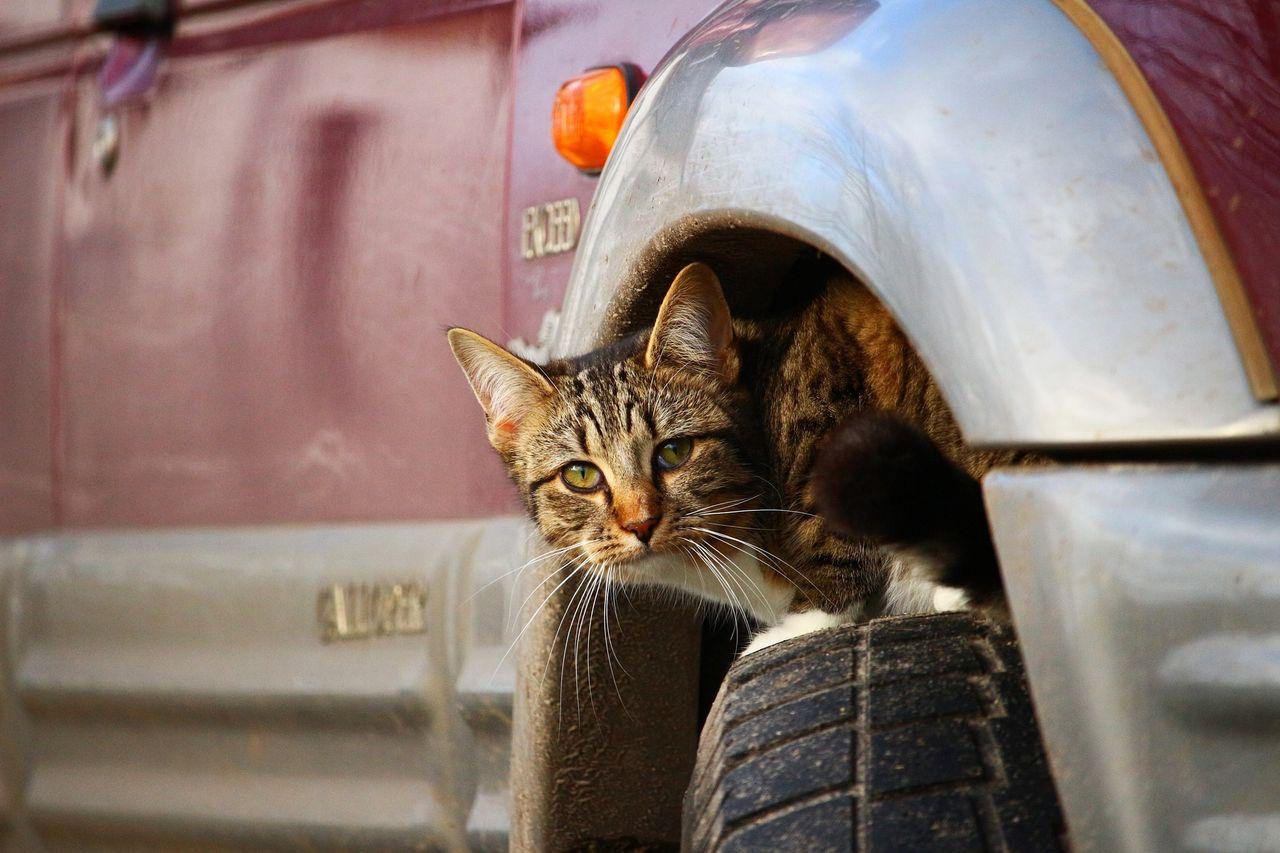自動車 保険 楽天