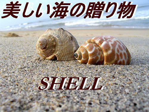 天然貝・シェル・海辺のインテリア