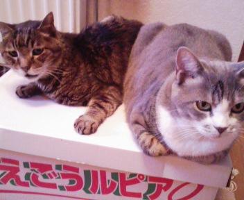 ねこ on the メロン箱