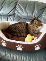 猫たんの寝場所(笑)
