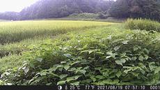 SnapCrab_NoName_2021-8-20_11-1-56_No-00