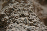 デカ蟻塚表面2