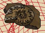 02アンモナイトの化石