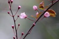 pink-4053094_960_720