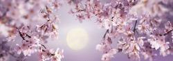 月桜_R-thumb-540x389-857s