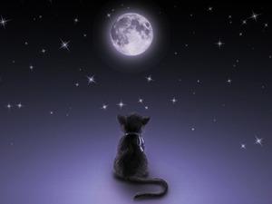 97132-1024x768-mooncat_large