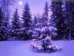 christmas-tree-moon-wallpaper