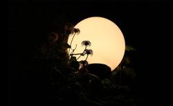 Moon-Garden (1)