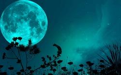 night_sky_moon_shadows_grass_blade_stars_1920x1200