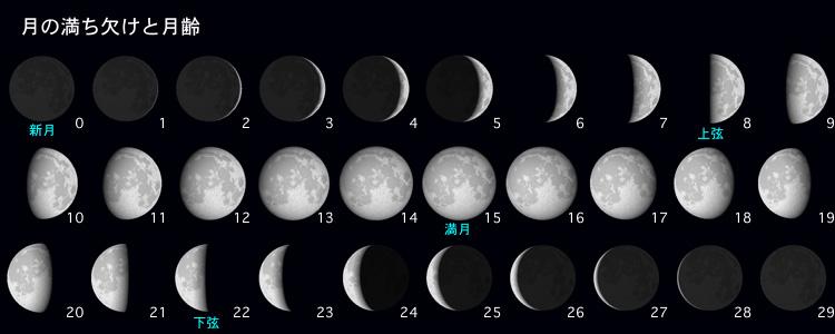 月の満ち欠けの様子とその見え ... : 月齢カレンダー : カレンダー