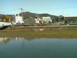 080117冬の鴨02