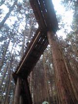 090716木の上の家02
