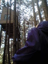 070916木の上の家