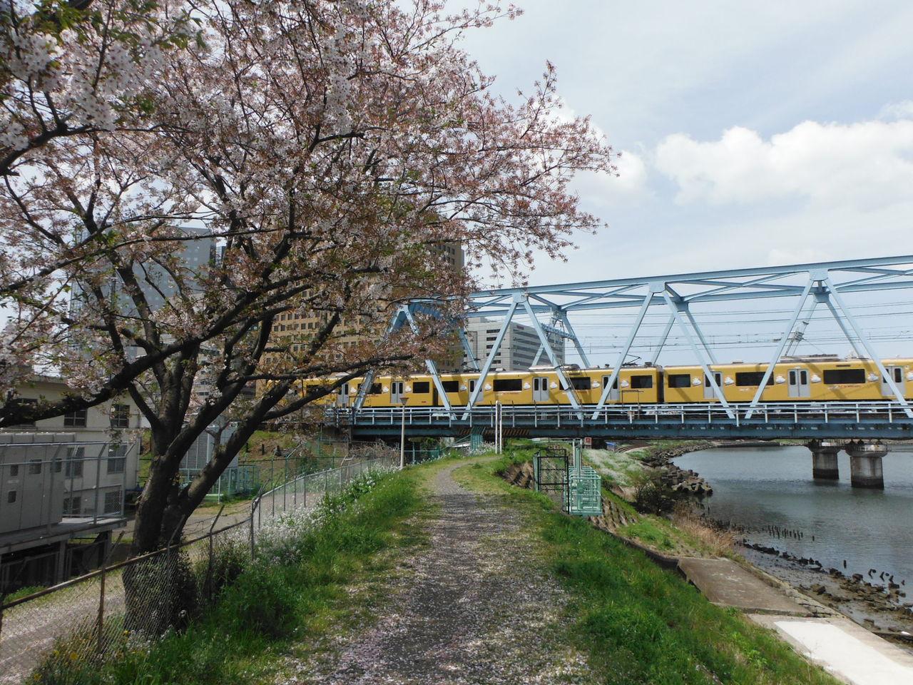 桜と川と京急と~