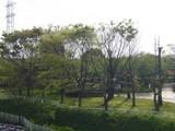 4月30日ふるさと公園