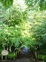森の小道 004