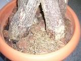 植木肥料�