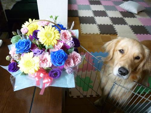 10月14日誕生日の花