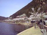 桜といむた池�
