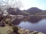 桜といむた池