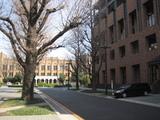 東京大学の学内風景