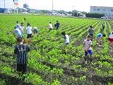 大豆畑の土寄せ