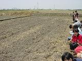 大豆の種まき