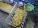 とれた大豆には大粒が多い