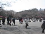 春近い上野公園