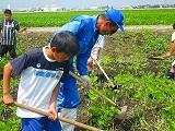 大豆畑の土寄せ1