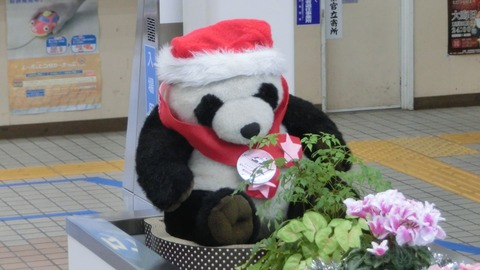 【きのくに線】 白浜駅 改札口の 「パンダ駅長」 がクリスマス仕様に! (2016年12月)