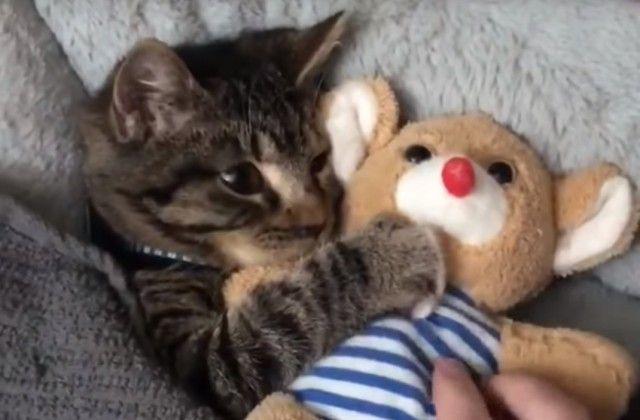 cuddlingcat5_e