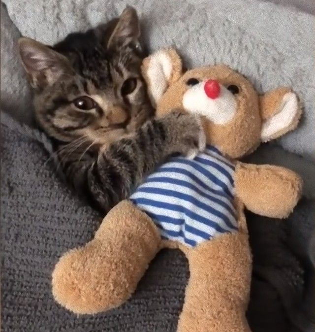 cuddlingcat4_e