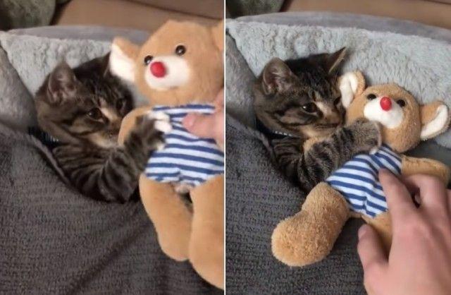 cuddlingcat3_e