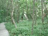 釧路湿原・遊歩道