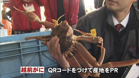 【福井】ズワニイワニに37万円!? 越前がにの漁が解禁される