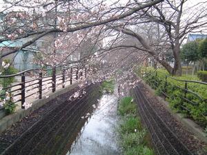 8384 川崎市 二ヵ領用水 経年変化 二ヵ領全景冬� (2)