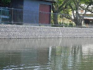 21丸池(清水町)5