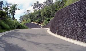 8 東京 小笠原父島 NR溶岩 (3)