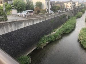 2019.5. 19 三沢川 (19)