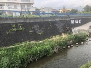 2019.5. 19 三沢川 (15)