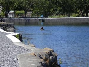 21丸池(清水町)2