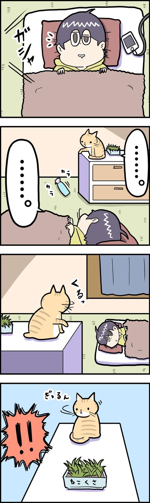 4コマ 猫草